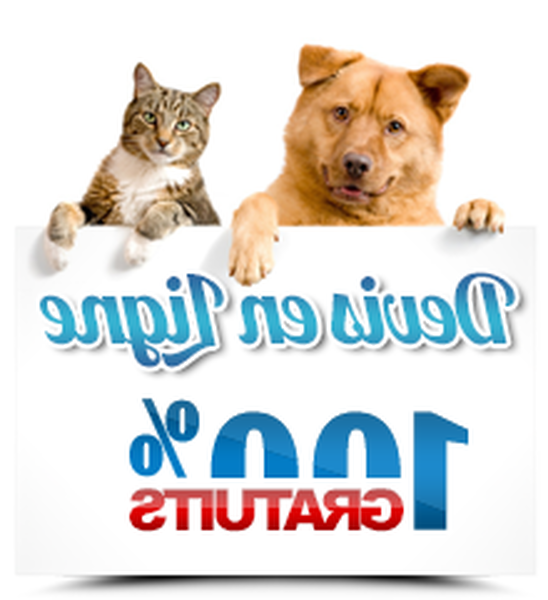 Le lynx mutuelle chien : offre exclusive - solide - guide
