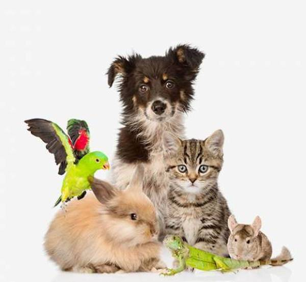 Mutuelle chien macif : incroyable - commander - guide achat