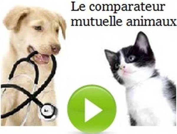 mutuelle chien carrefour