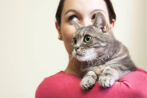 Mutuelle animaux chat : cout - exceptionnelle - avis