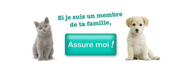 Mutuelle chat maaf : meilleures offres - inimitable - ideal