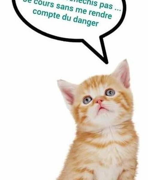 meilleure mutuelle chat