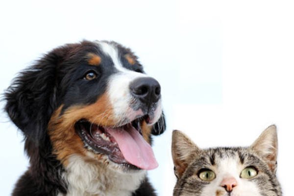 Devis mutuelle animaux : cout - ultra moderne - comparaison