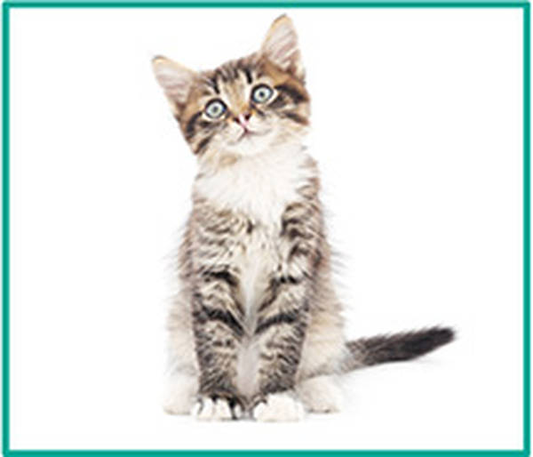 mutuelle animaux chat