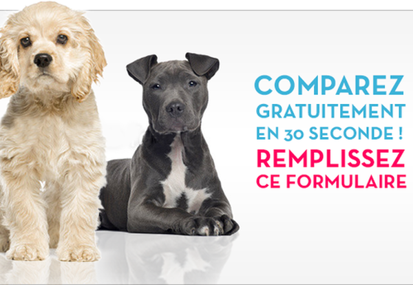 mutuelle animaux bulle bleue