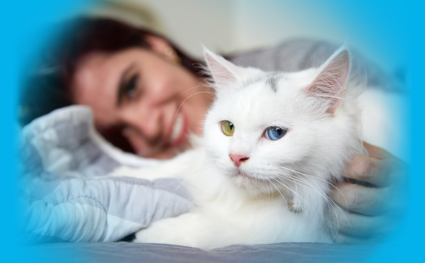 Assurance chien chat : prix abordable - inedit - utile