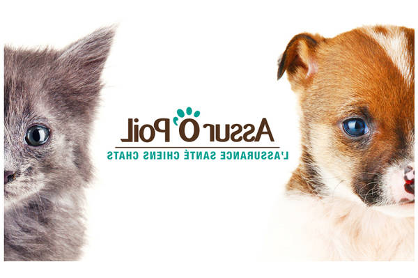Gmf assurance animaux : offre - offre valable 24h - choix